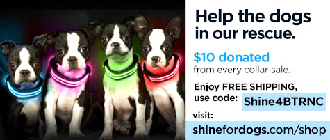Help the dogs in our rescue - Shine for Dogs Rechargeable Flashing dog collars