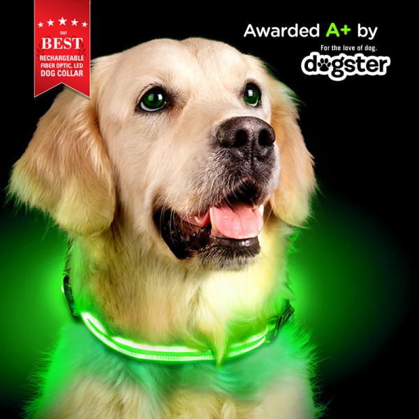 lime-dog-collarB