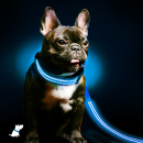 shine-for-dogs-leash-collar-combo-feature