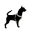 Shine for Dogs small size LED flashing collar