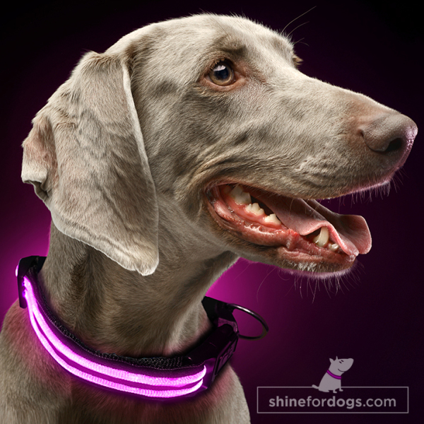 Shine for dogs - care pink large LED rechargeable dog flashing collar