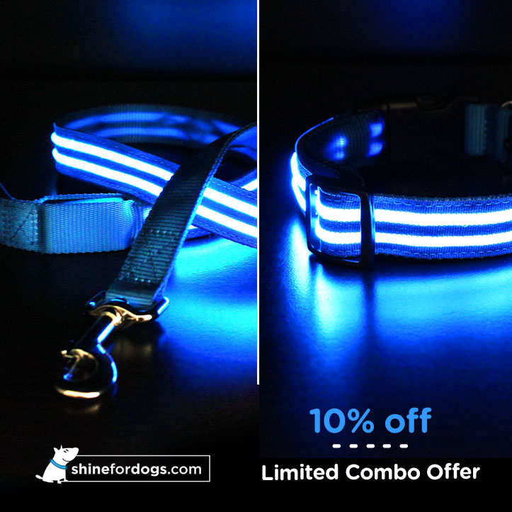 blue-shine-for-dogs-leash-collar-combo-ON