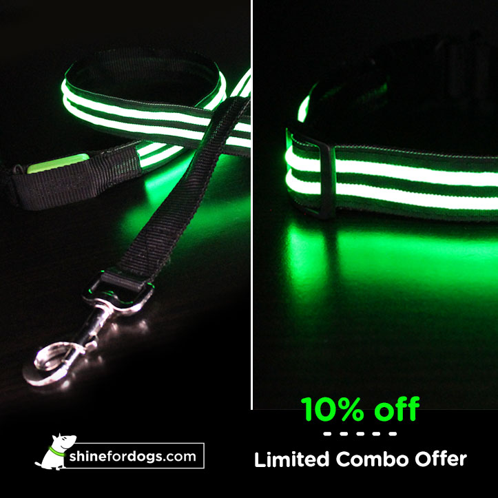green-shine-for-dogs-leash-collar-combo-ON