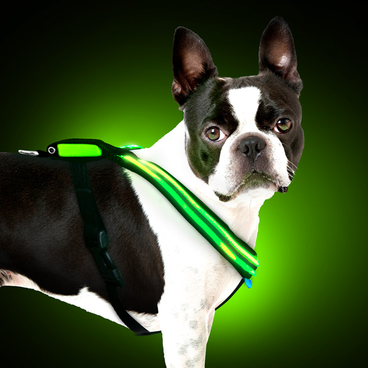 GREEN-shine-for-dogs-harness